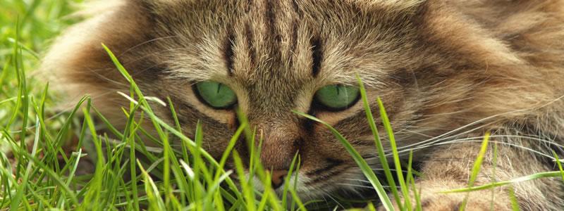 cat in grass
