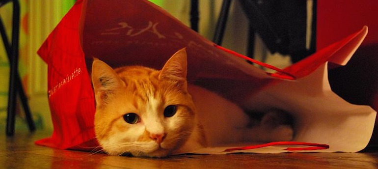 Cat in a shopping bag