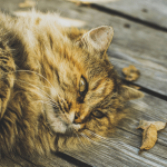 A cat lying on wooden decking