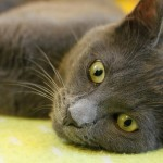 gray cat lying on side